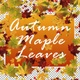 Autumn Maple Leaves - VideoHive Item for Sale