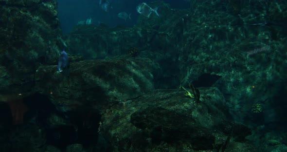 VideoHive Aquarium 7 20402092