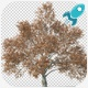 4K Growing Tree v3 - VideoHive Item for Sale