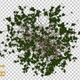 Ivy Shapes - VideoHive Item for Sale