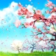 Cherry Blossom Petals Falling Down During The Day (4K) - VideoHive Item for Sale