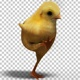 Baby Chichen   Can Can Dance (2 Pack) - VideoHive Item for Sale