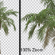Breezy Palm Tree Vol2 - Alpha Channel - VideoHive Item for Sale