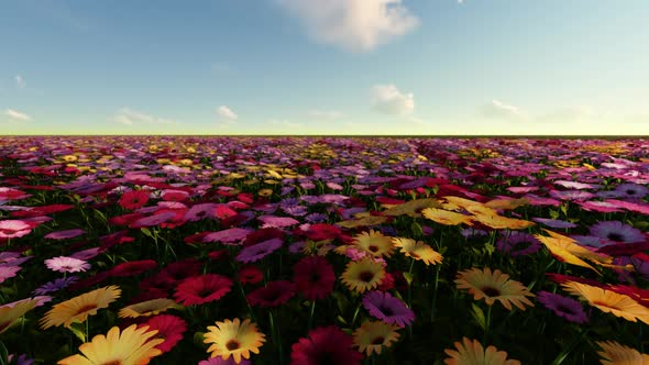 Flower field sunset Aesthetic Tumblr Play Preview Video Videohive Sunset Flower Field By Vidostock Videohive