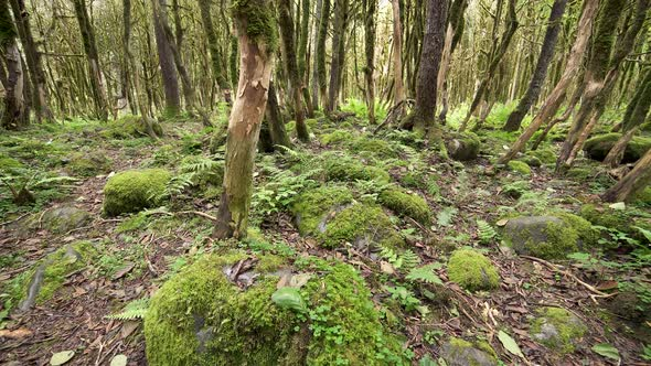 Mossy Forest Floor by Pro-Stock | VideoHive