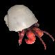 Hermit Crab Walking - VideoHive Item for Sale