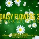 Daisy Flowers Backgrounds 3 - VideoHive Item for Sale
