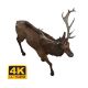 Reindeer Walking - VideoHive Item for Sale