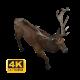 Reindeer Walking - VideoHive Item for Sale