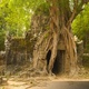4K Overgrown Tree at Ta Som Temple, Angkor, Siem Reap, Cambodia - VideoHive Item for Sale